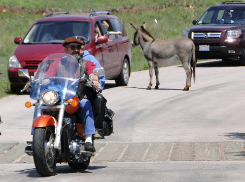 Burro and motorcycle on road